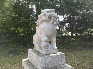 IMAG6528